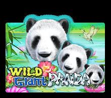 Wild Giant Panda - joker-roma